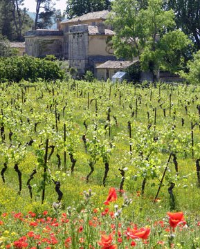 Poppies at Chateau la Canorgue