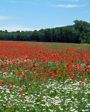 Rield near Roussillon