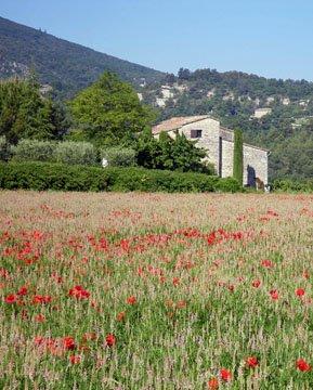 Field near Lacoste