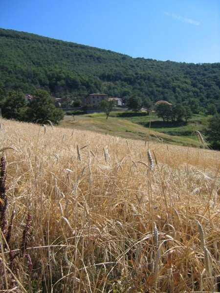 farro_field_chestnut_forest_garfagnana
