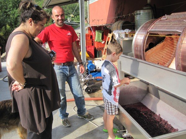 How grapes are pressed