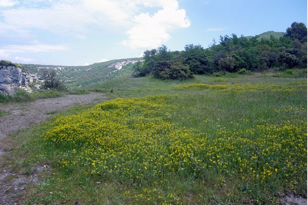 Beautiful meadow at Fort de Buoux