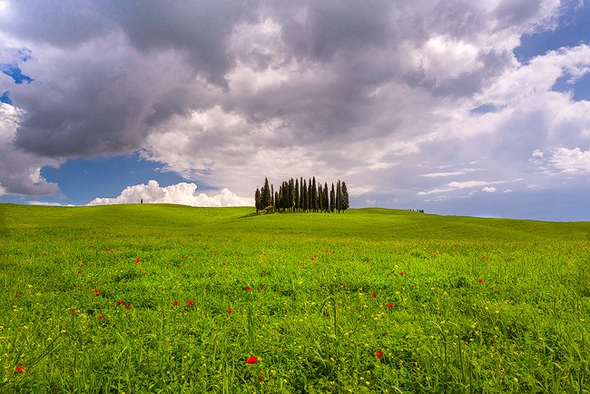 The much photographed cypress grove just outside of Pienza.