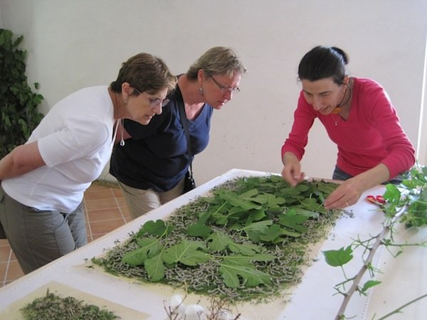 Sapori e Saperi guests help feed Stefania's ravenous silkworms.