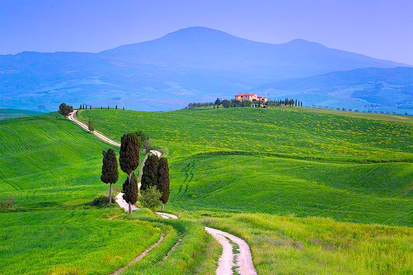 cypress lined road leading to terrapile farmhouse in Tuscany, Italy