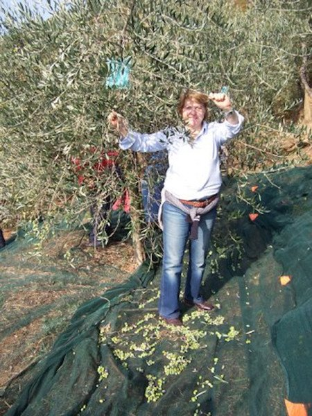 You get to pick olives