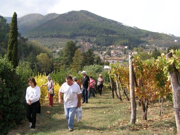 Walking through the vineyard with Augusto Orsi