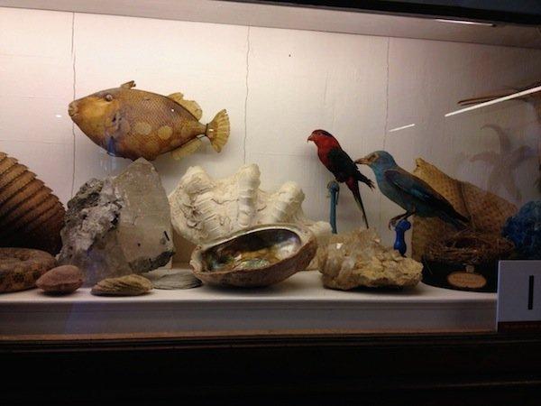 Birds, fish, shells, rocks