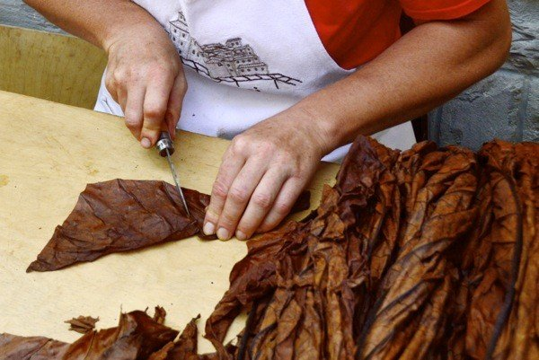 Roberta shapes the wrapper of a Toscano cigar