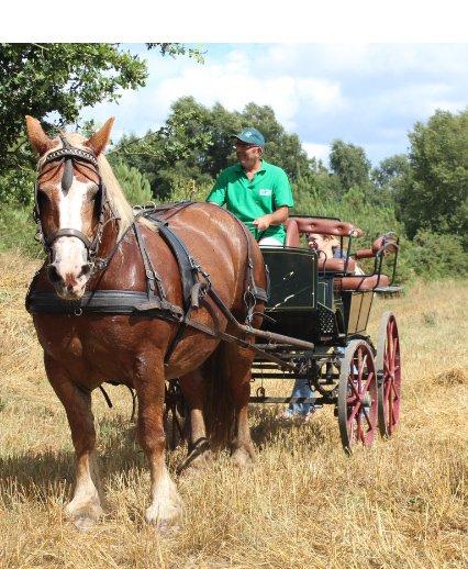 Breton heavy horse and trap