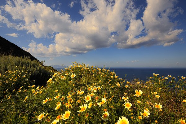 Wildflowers at Ancient Thira.