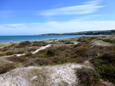 Studland dunes looking back to Old Harry Rocks