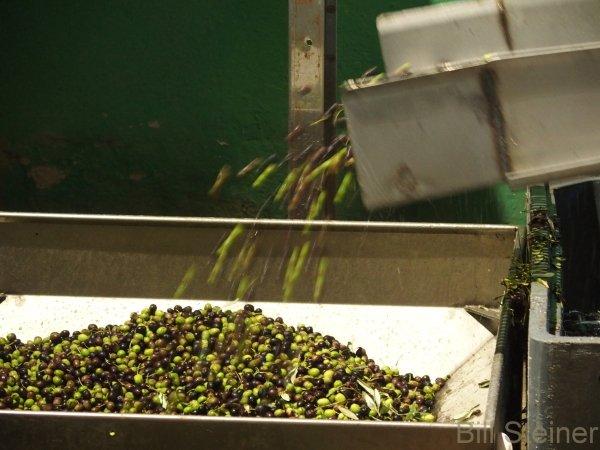 Umbrian oil is made from a blend of 3 types of olives