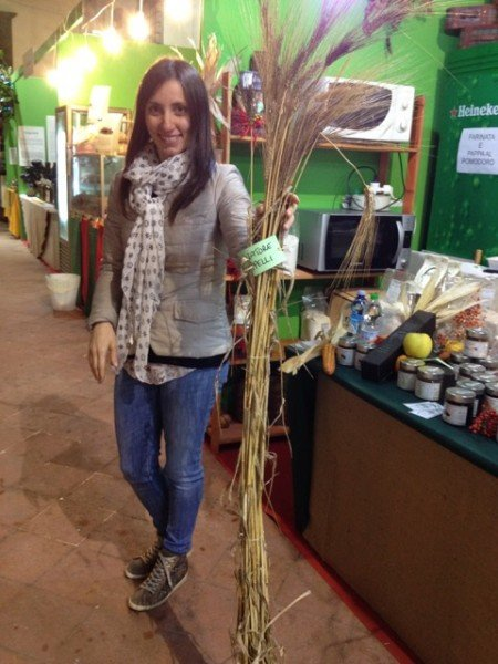 Tall bearded durum wheat with