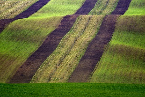 colorful fields, moravia,czech republic
