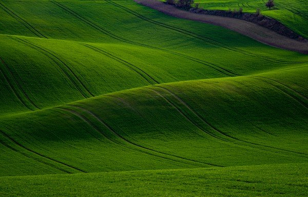 moravia,czech republic, wheat fields