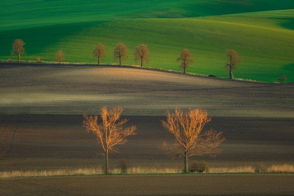 fields,chestnut trees, moravia,czech republic