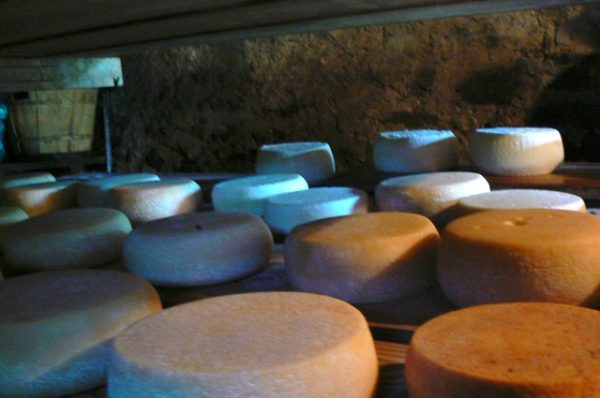Pecorino at Cerasa is matured in a natural cellar