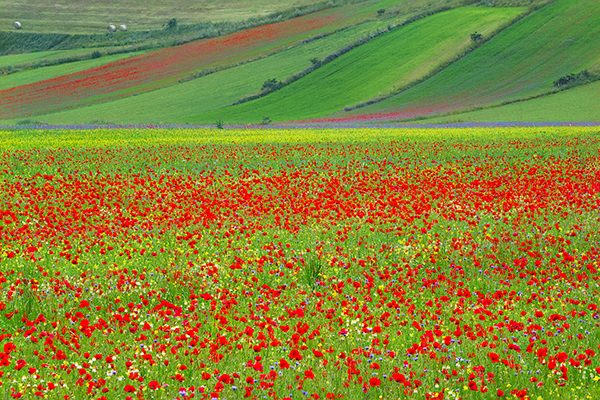 colorful_fields_piano_grande_umbria_italy