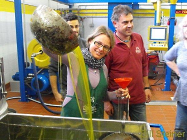 We harvest olives for oil