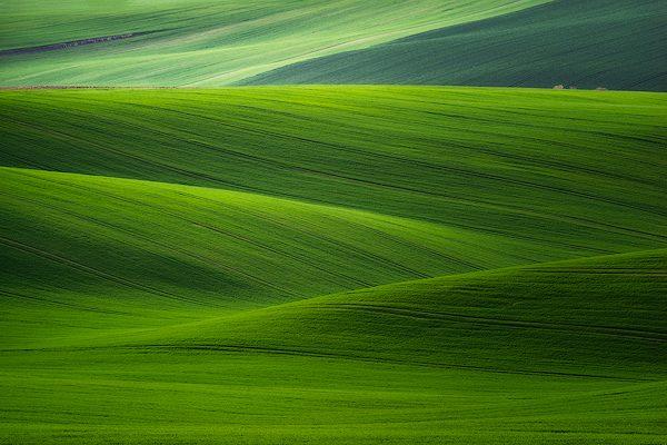 green wheat fields moravia czech republic