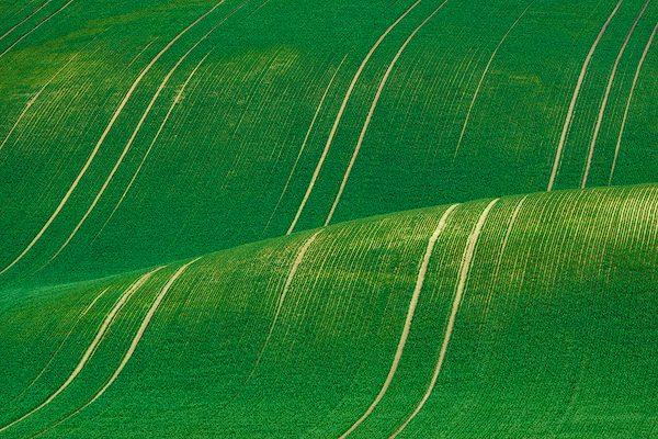 Rolling wheat fields moravia czech republic