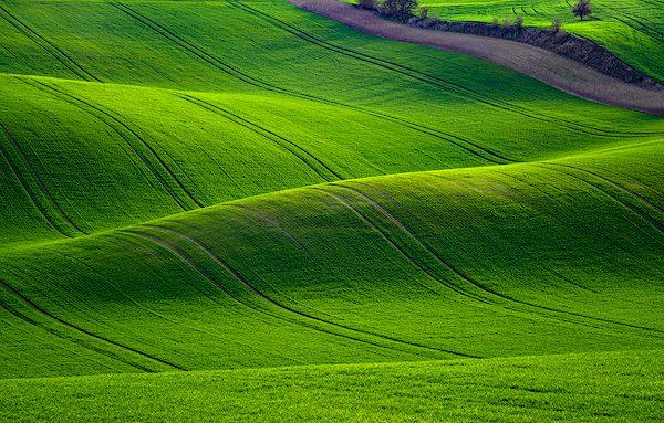 green-rolling-wheat-fields-moravia-czech-republic