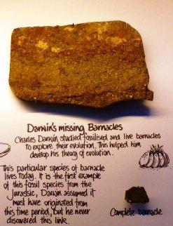 Charles Darwin, missing link, barnacle