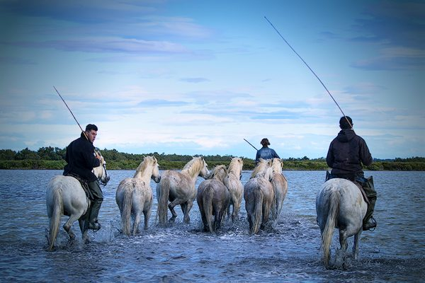 Camargue white horses and guardians, Provence, France