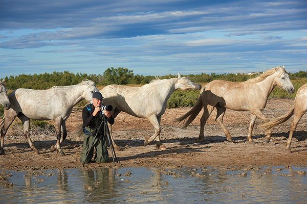 photographer, camargue white horses, Provence, France.