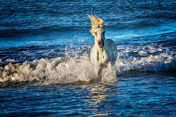 Cam argue white horse running in surf, Provence, France