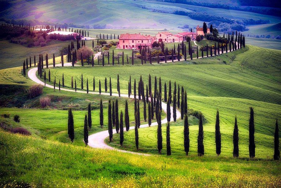 cypresses, windy road, farm, Tuscany, Italy