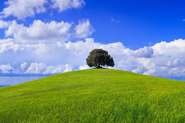 tree, hill, clouds, tuscany,italy