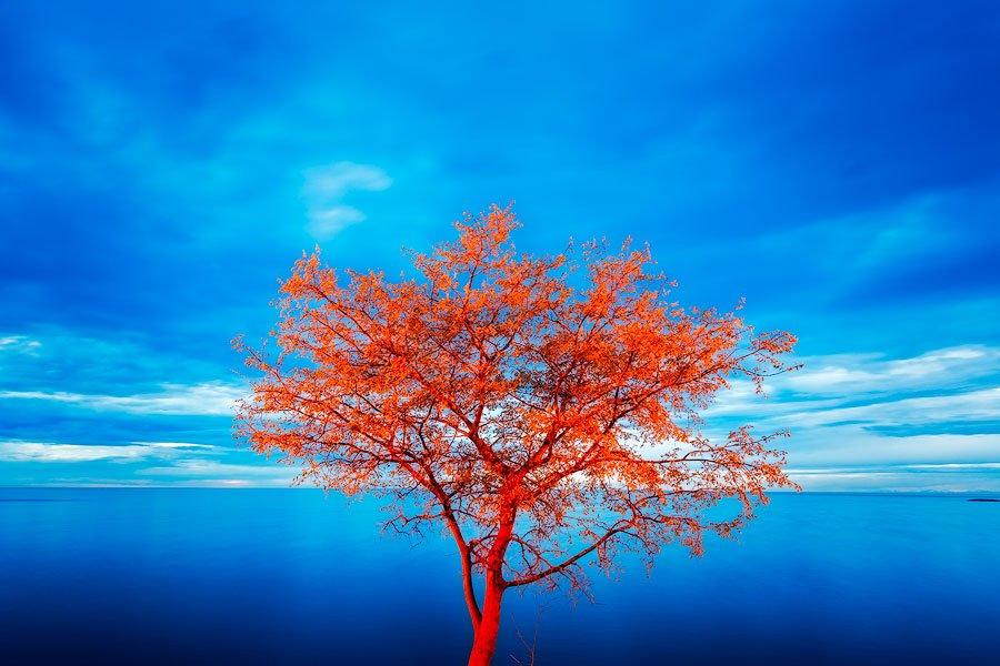 tree, sea, night, rovinj, croatia