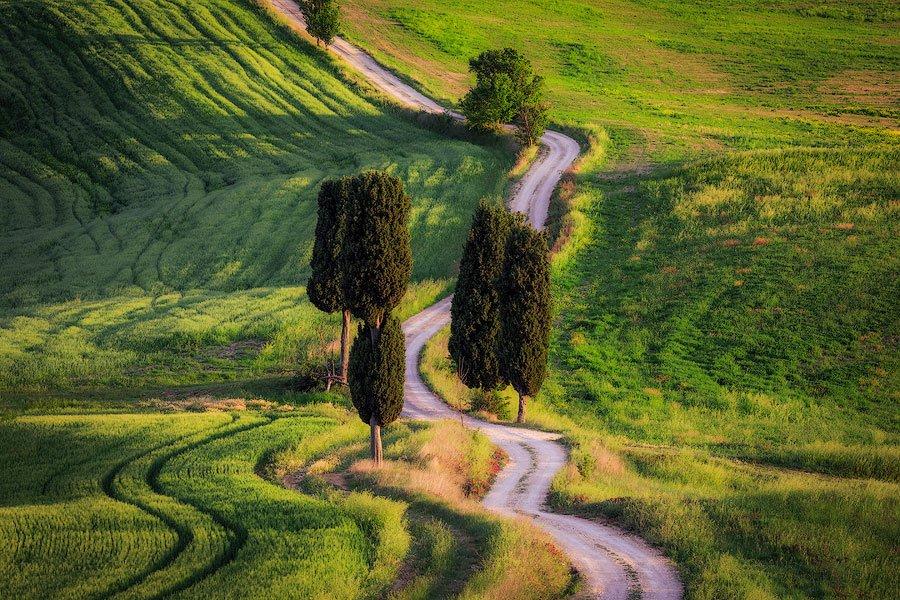 cypresses, windy road, tuscany, Italy