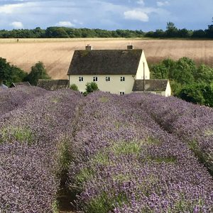 Cotswolds Experience