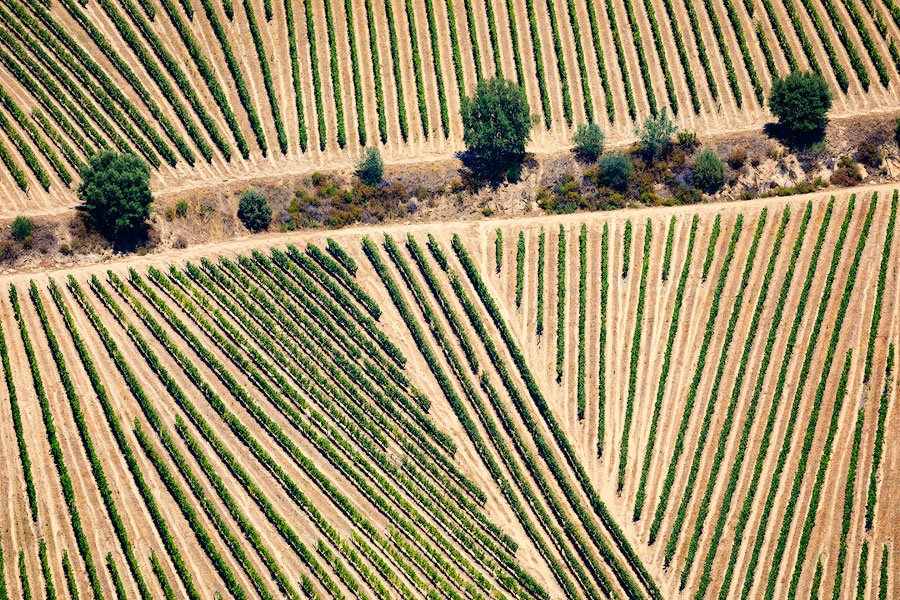 vineyard patterns, Douro valley, Portugal