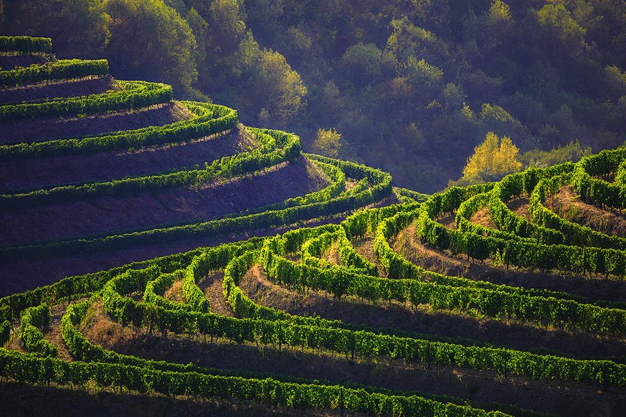 terraced vineyards, Douro valley, Portugal