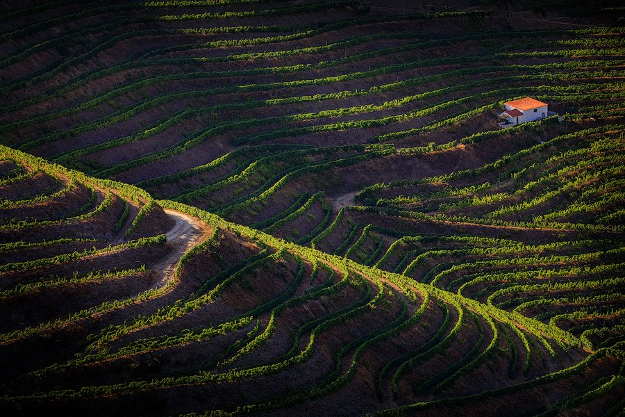 Vineyard terraces, Douro Valley, Portugal