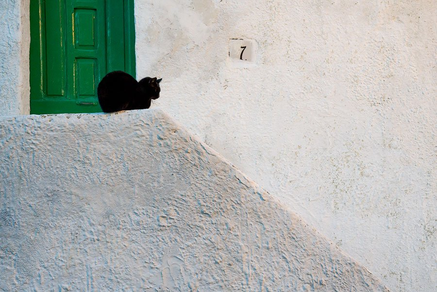 Contented black cat on Procida, Italy