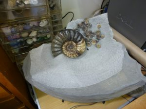 ammonite, Lyme Regis