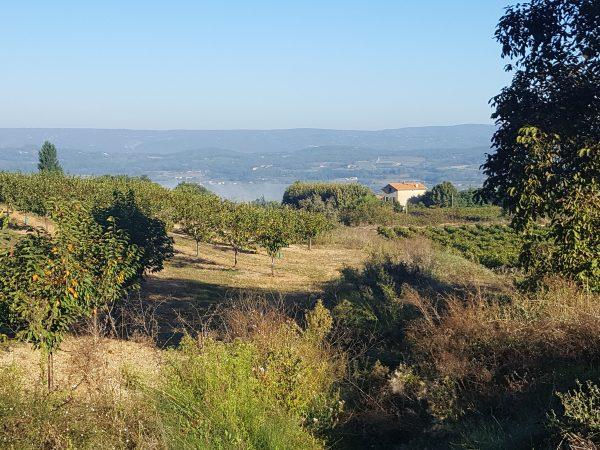 Luberon walk
