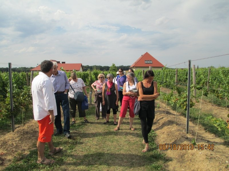 Touring Lower Silesian vineyards.