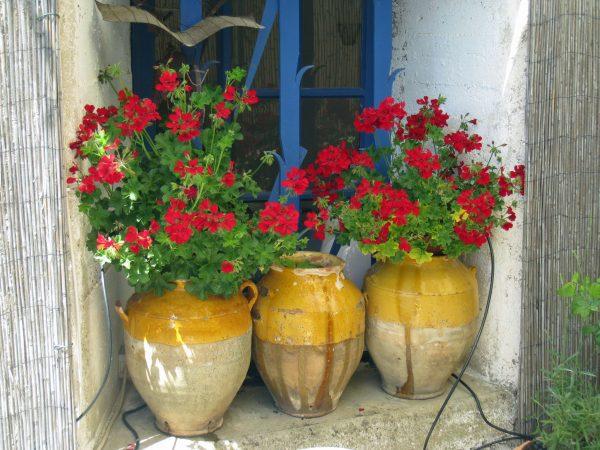 France_Provence_Roussillon_flowerpots