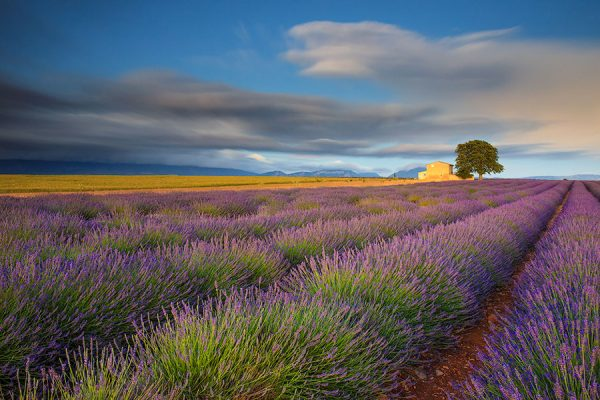 photography_travel_tours_provence_lavender