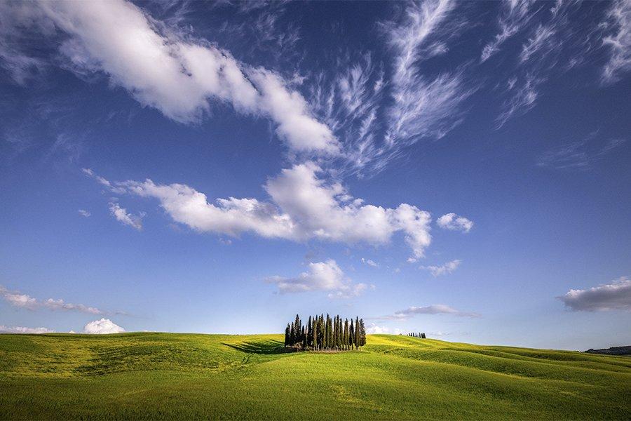 Italy_cypresses