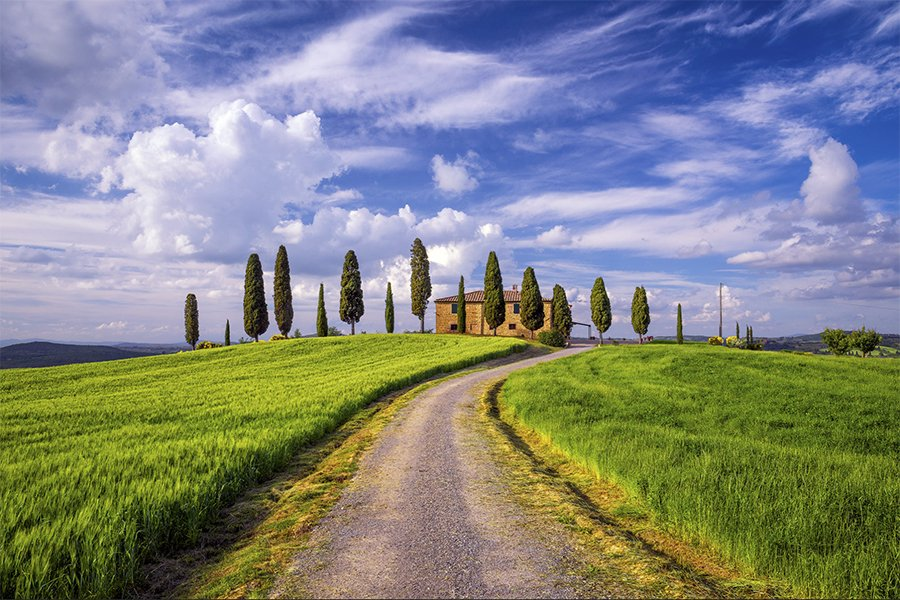 turscany_I Cipressini