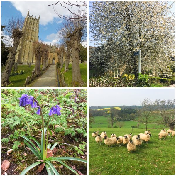 Spring collage of the Cotswolds, flowers and sheep
