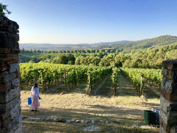 Monte Vibiano Vineyard