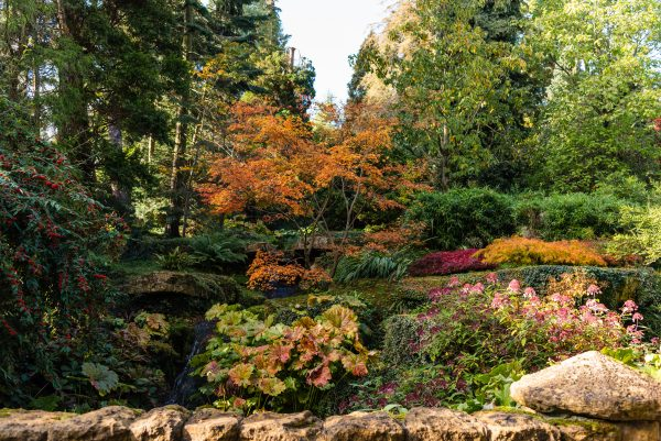 Batsford Arboretum (Courtesy of Cotswolds Tourism)
